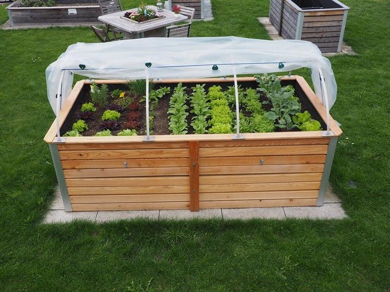 Hochbeet mit Gemüse und Folientunnel