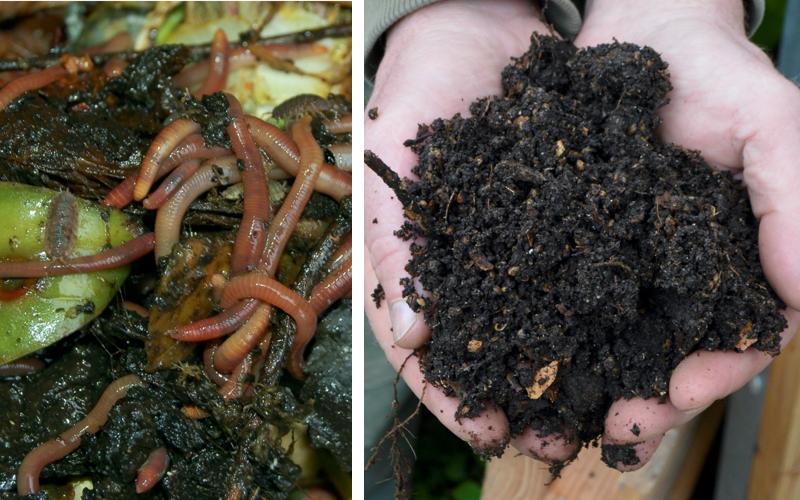 Regenwurm-Komposter-5